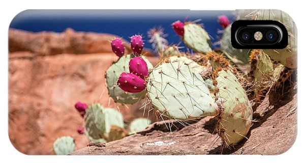 Prickly Pear (opuntia Sp.) In Fruit Phone Case by Michael Szoenyi