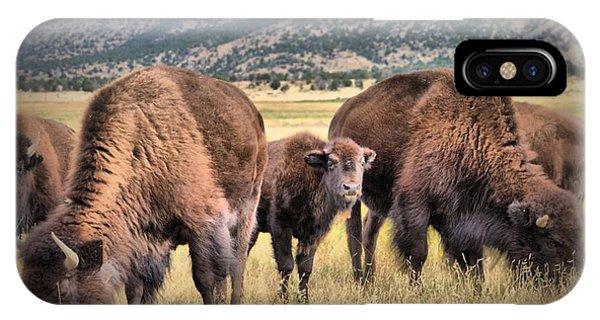 Pride Of The Herd IPhone Case