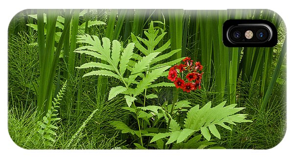 Primrose Amidst Ferns IPhone Case