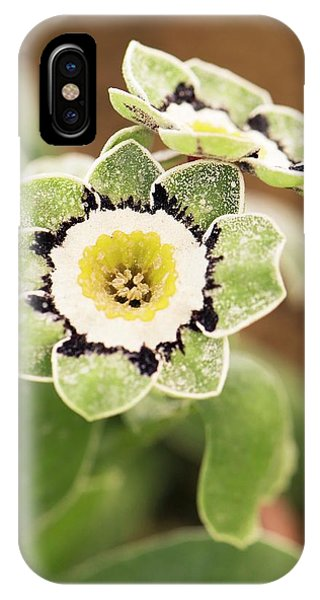 Cultivar iPhone Case - Primula Auricula 'beppi' Flowers by Adrian Thomas