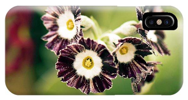 Cultivar iPhone Case - Primula Auricula 'konigin Der Nacht' by Adrian Thomas
