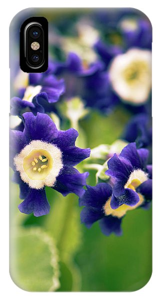 Primula Auricula 'old Irish Blue' Flowers Phone Case by Adrian Thomas