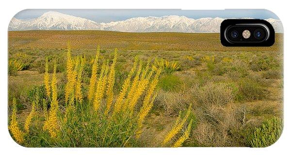 Princes Plume And Mount Tom - Spring Wildflowers Owens Valley Eastern Sierra California IPhone Case