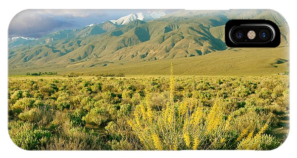 Princes Plume And White Mountains - Owens Valley California IPhone Case