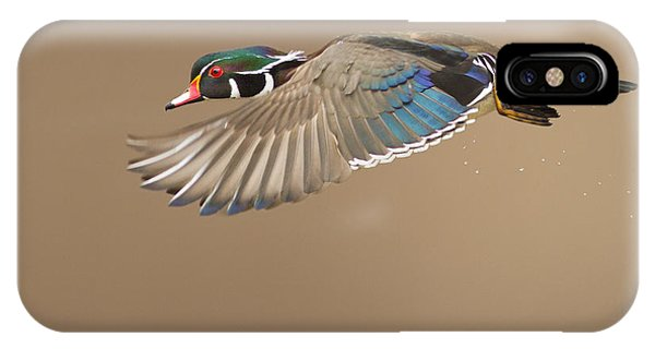 Probably The Most Beautiful Of All Duck Species IPhone Case