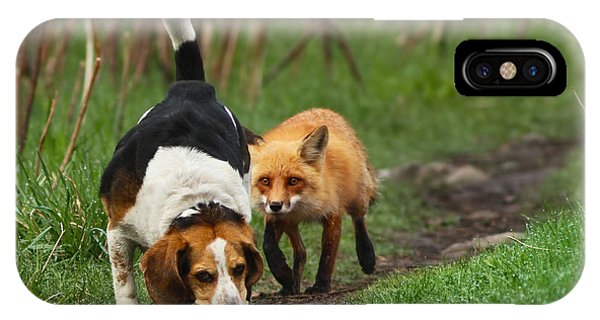 Fox iPhone Case - Probably The World's Worst Hunting Dog by Mircea Costina Photography