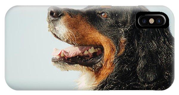 Bernese Mountain Dog iPhone Case - Profile Of Dog by Aleksey Tugolukov
