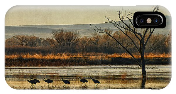 Promenade Of The Cranes IPhone Case