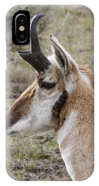 Pronghorn Buck Profile Phone Case by Jill Bell