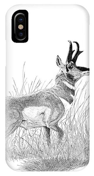 Pronghorn IPhone Case
