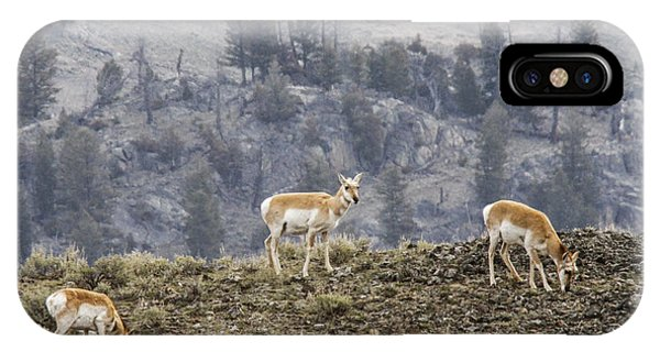 Pronghorn Does Phone Case by Jill Bell