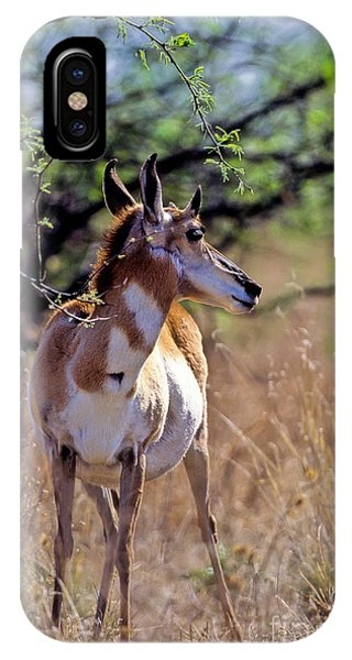 Pronghorn In Spring IPhone Case