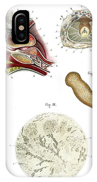 Prostate Anatomy Phone Case by Collection Abecasis
