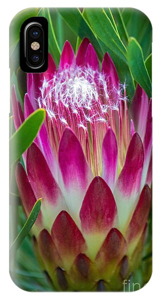 IPhone Case featuring the photograph Protea In Pink by Kate Brown