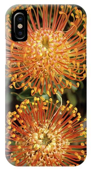 Stamen iPhone Case - Protea Pincushion Flowers by Cristina Pedrazzini/science Photo Library