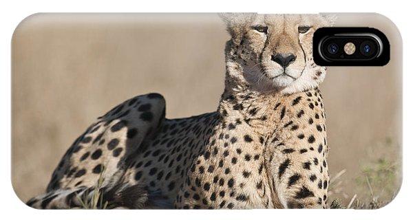 Proud Cheetah IPhone Case