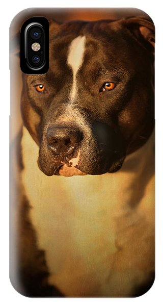 Bull iPhone Case - Proud Pit Bull by Larry Marshall