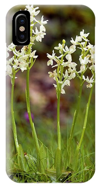 Monocotyledon iPhone Case - Provence Orchids (orchis Provincialis) by Bob Gibbons