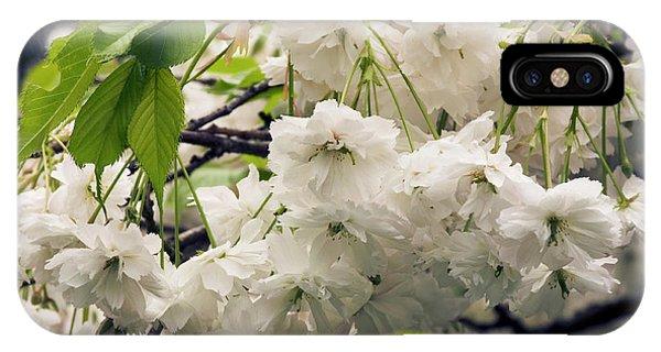 Cultivar iPhone Case - Prunus 'shogetsu' Flowers by Adrian Thomas