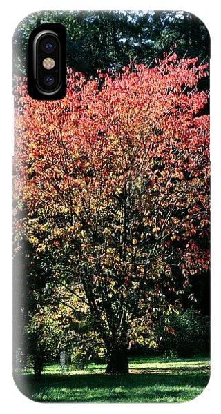 Prunus Sp Phone Case by Chris Dawe/science Photo Library