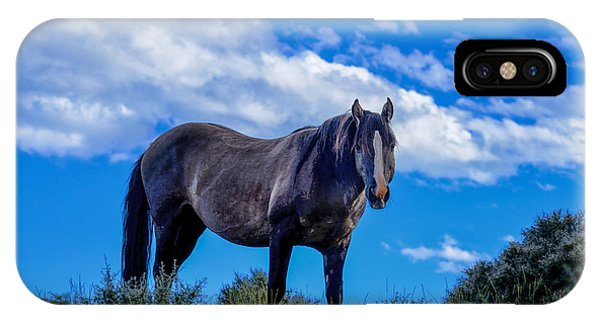 Pryor Mountain Wild Horse IPhone Case