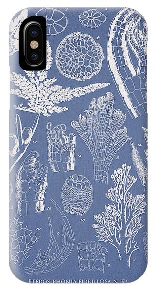 Pterosiphonia Fibrillosa IPhone Case