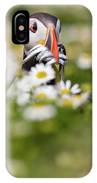 Puffin & Daisies IPhone Case