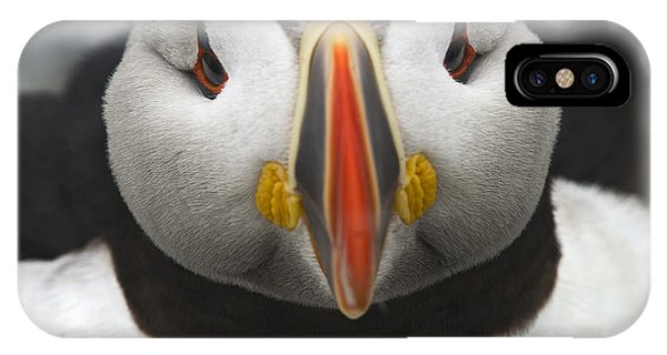 Puffin It Up... IPhone Case