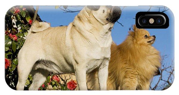 Pomeranian iPhone Case - Pug And Pomeranian by Jean-Michel Labat
