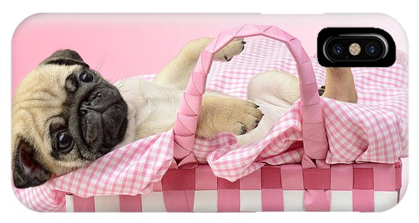 Pug iPhone Case - Pug In A Basket by MGL Meiklejohn Graphics Licensing