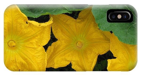 Pumpkin Blossom Trio IPhone Case