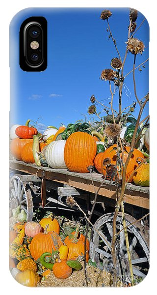 Pumpkin Farm IPhone Case