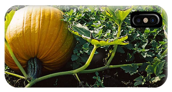Half Moon Bay iPhone Case - Pumpkin Growing In A Field, Half Moon by Panoramic Images