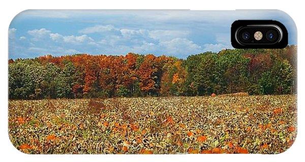 Pumpkin Patch - Panorama IPhone Case