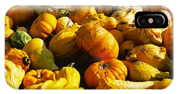 Half Moon Bay iPhone Case - Pumpkins And Gourds In A Farm, Half by Panoramic Images