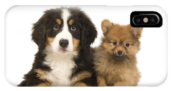 Pomeranian iPhone Case - Puppies by Jean-Michel Labat