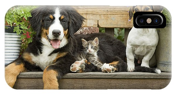 Bernese Mountain Dog iPhone Case - Puppy Dogs And Kitten by Jean-Michel Labat