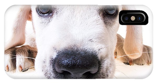Yellow Lab iPhone Case - Puppy Face by Diane Diederich