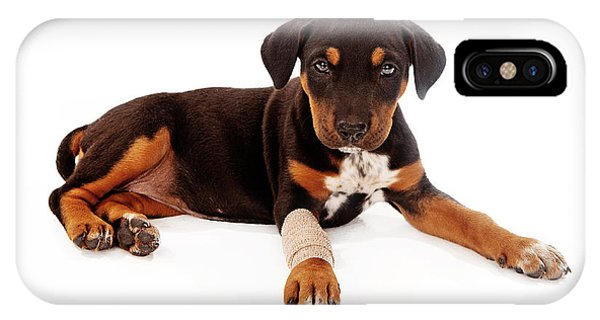 Puppy Laying With Injury IPhone Case