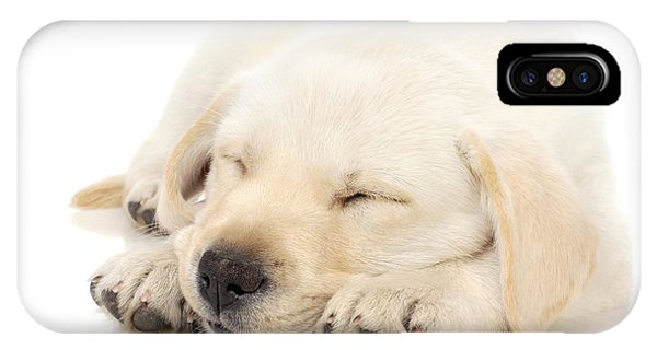 Pup iPhone Case - Puppy Sleeping On Paws by Johan Swanepoel