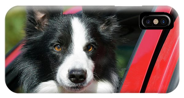 Purebred Border Collie Looking Out Red IPhone Case