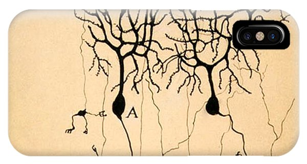 Purkinje Cells By Cajal 1899 IPhone Case