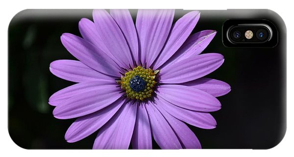 Purple African Daisy IPhone Case