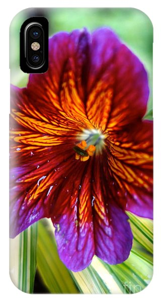 IPhone Case featuring the photograph Purple And Orange by Jacqueline Athmann