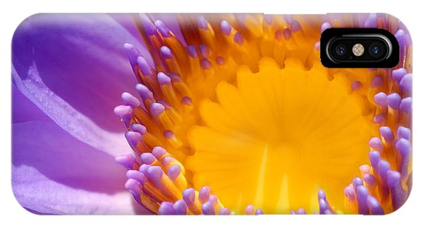 Purple And Yellow Water Lily Close Up IPhone Case