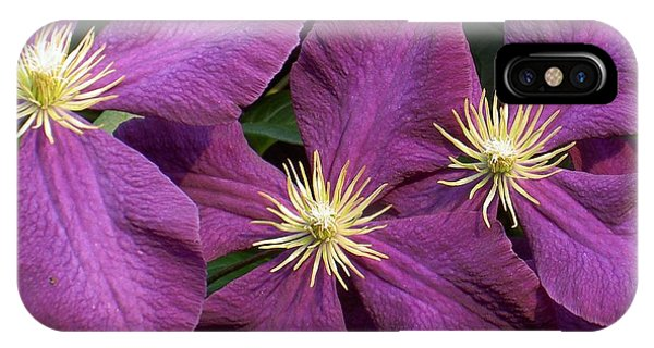 Purple Clematis IPhone Case