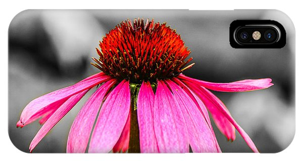 Purple Coneflower - Sc IPhone Case