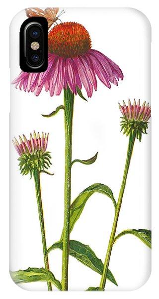 Purple Coneflower - Echinacea Purpurea  IPhone Case