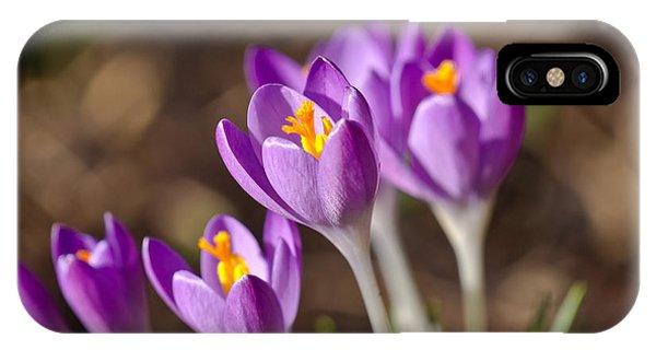 Purple Crocus IPhone Case
