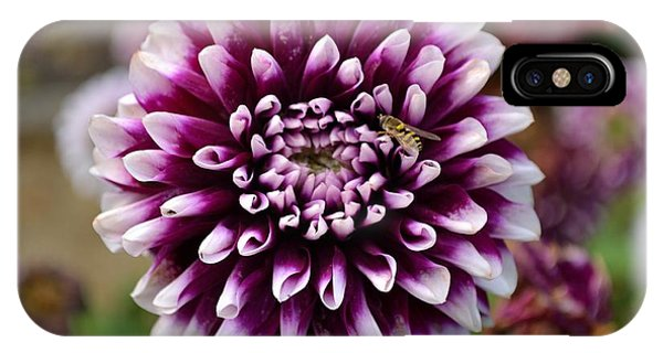 Purple Dahlia White Tips IPhone Case
